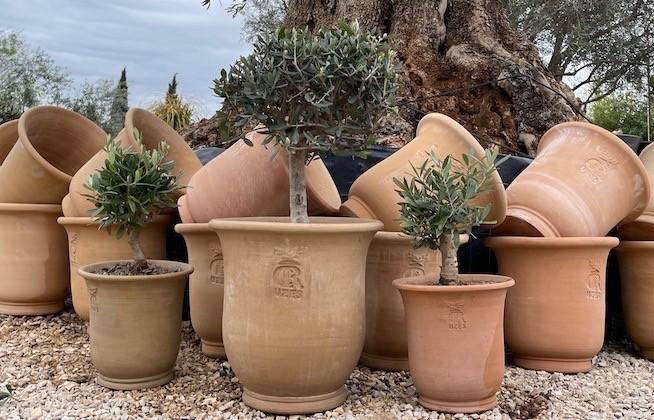 """Pots """"CR Classique"""" et oliviers"""